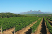 Luxury Cape Winelands Day Tour