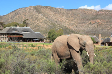 Cape Town Aquila Game Reserve Safari Tours