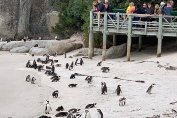 Small Group Cape Point Explorer Day Tour & Penguins CAPE OF GOOD HOPE & CAPE POINT PRIVATE TOUR